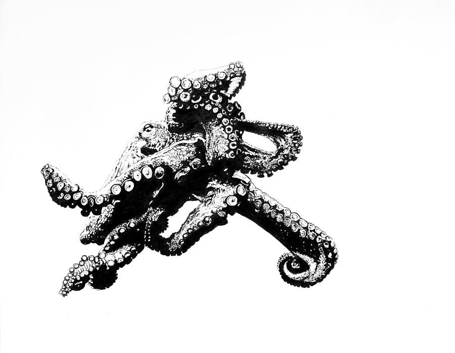 octopus drawing the iconic octopus by andrea keating