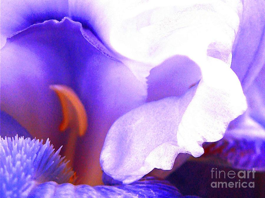Iris Photograph - The Intimate Iris by Jerome Stumphauzer