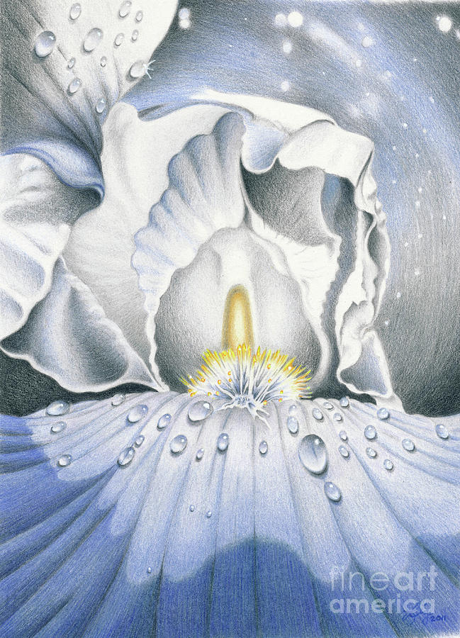Flower Painting - The Iris Universe by Elizabeth Dobbs