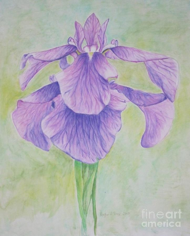 Floral Drawing - The Irises by Heather Perez
