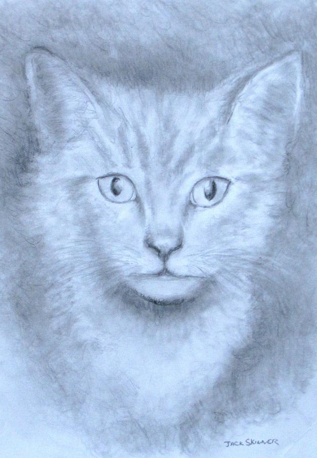 Pencil Drawing Drawing - The Kitten by Jack Skinner