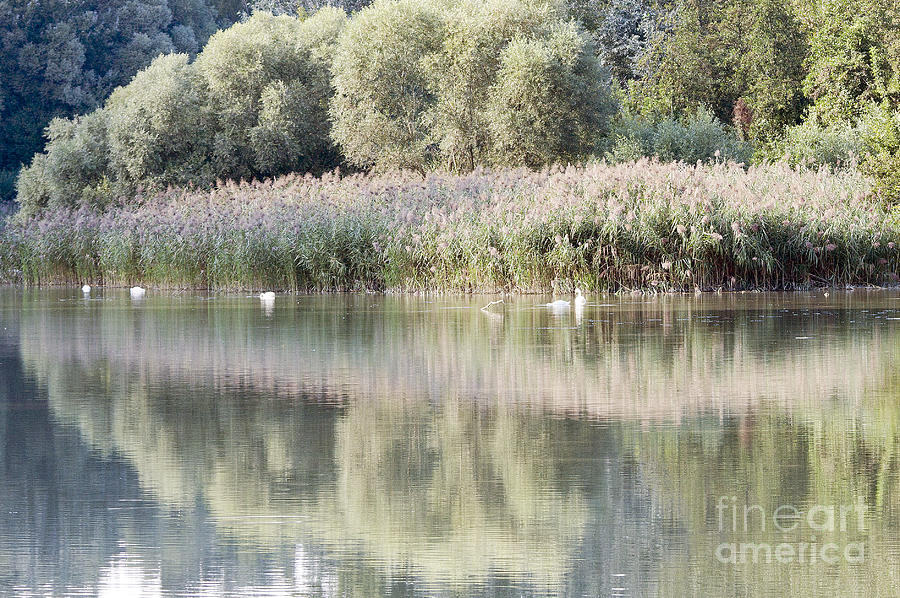Odon Photograph - The Lake Reflection by Odon Czintos