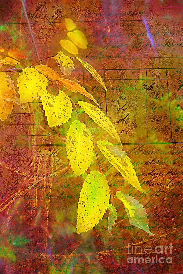 Vintage Photograph - The Leaves Of Yesteryear by Judi Bagwell