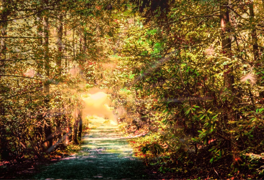 Trail Photograph - The Light by Barry Jones