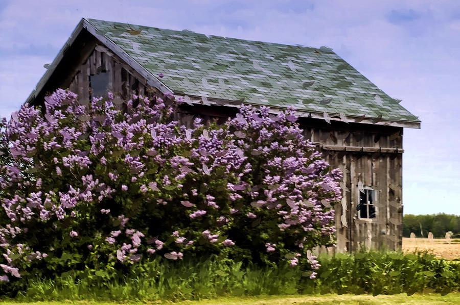 Barn Photograph - The Lilac Barn by Cheryl Cencich