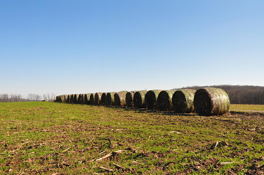 Hay Photograph - The Line Up by Bill Cannon