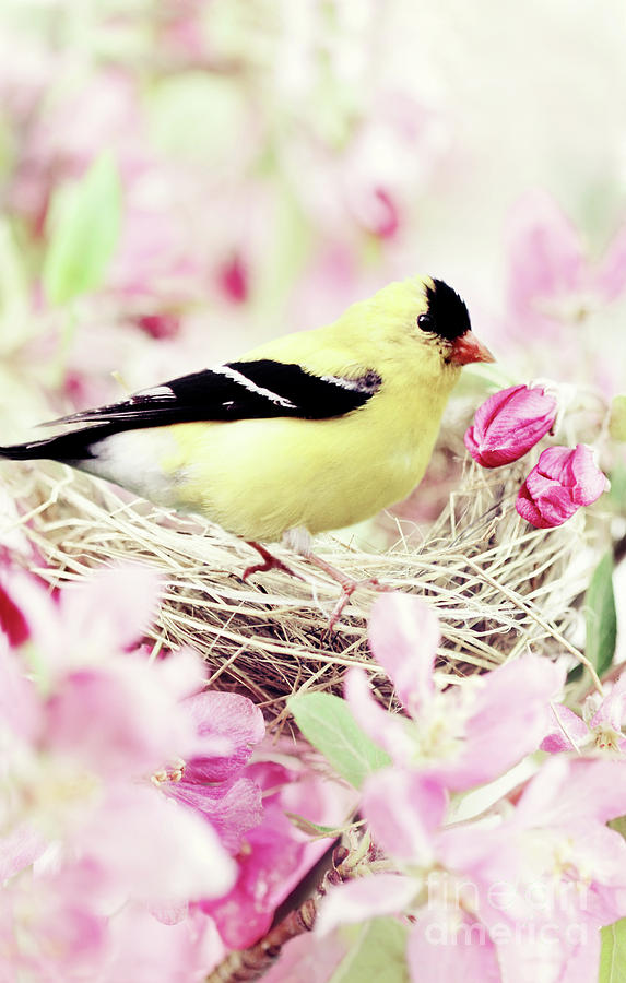Spring Photograph - The Little Finch by Stephanie Frey