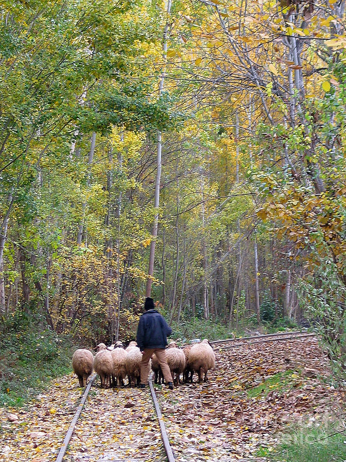 Shepherd Photograph - The Little Shepherd by Issam Hajjar