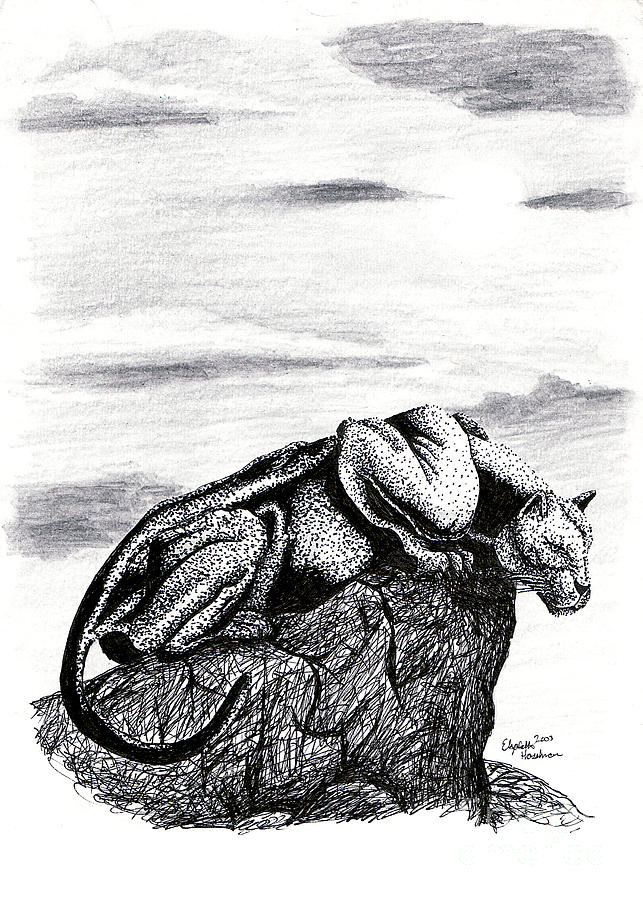 Panther Drawing - The Look Out by Elizabeth Harshman
