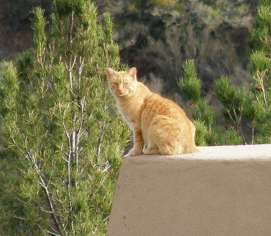 Cats Photograph - The Lookout by FeVa  Fotos