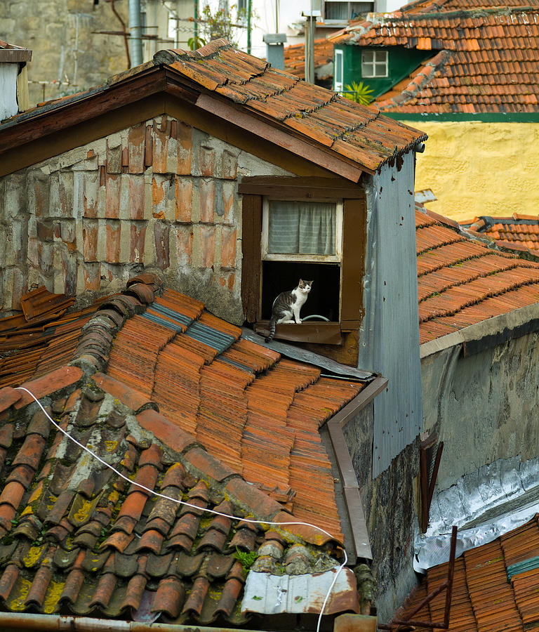 Europe Photograph - The Lord Of The Roofs by Dias Dos Reis
