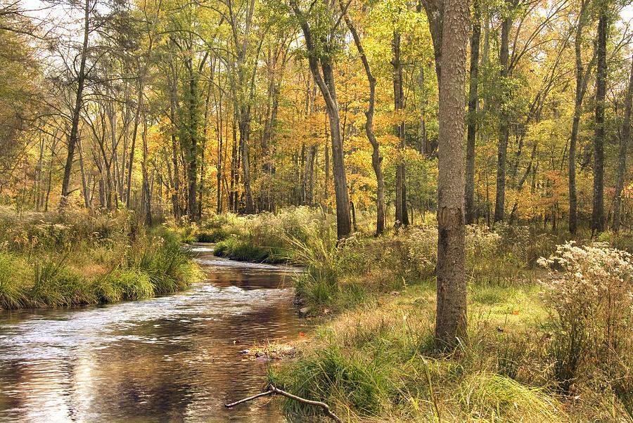 Creek Photograph - The Lost Creek by Cindy Rubin