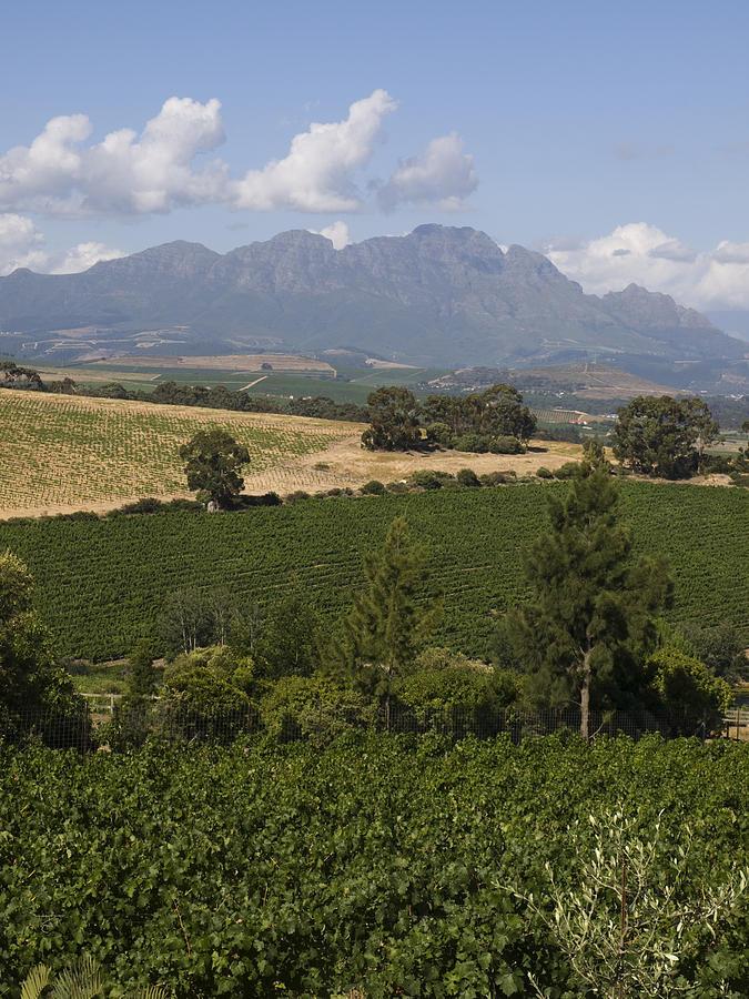 Stellenbosch Photograph - The Lush Garden Landscape Of A Vineyard by Stacy Gold