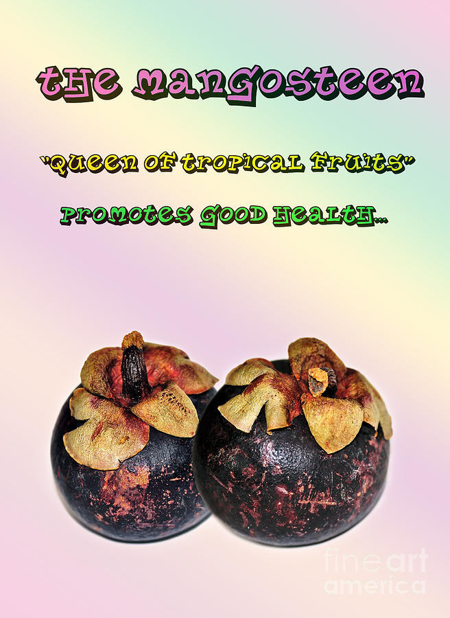 Photography Photograph - The Mangosteen - Queen Of Tropical Fruits by Kaye Menner