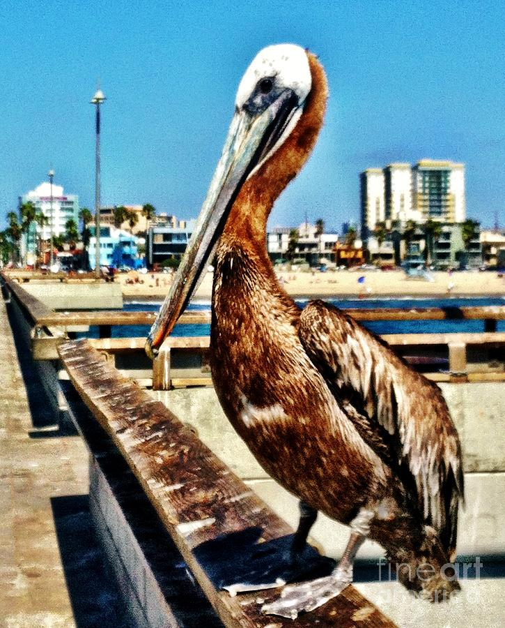 Pelican Photograph - The Mayor Of Venice Pier by Daniele Smith