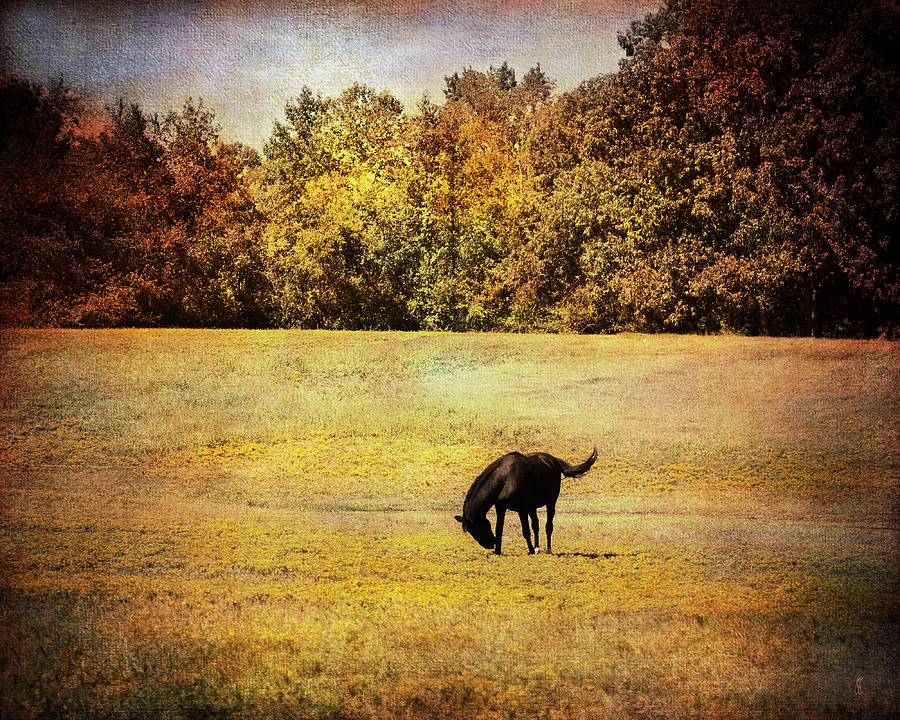Horse Photograph - The Meadow by Jai Johnson