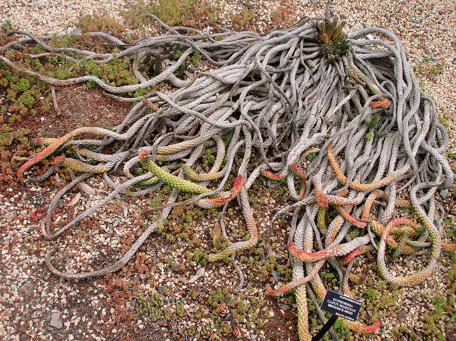 Medusa Photograph - The Medusas Wigs by Hiroko Sakai