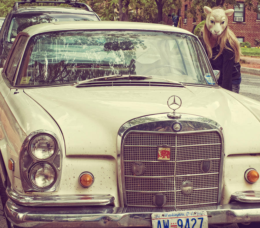 Mask Photograph - The Mercedes Sheep by Laura George