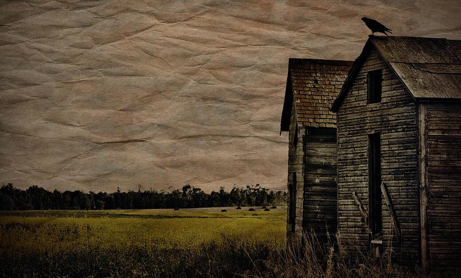 The Messenger  Photograph by Jerry Cordeiro
