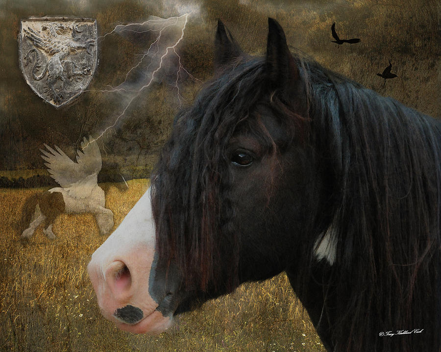 Equine Photograph - The Messenger by Terry Kirkland Cook