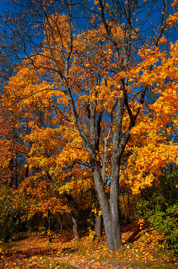 Autumn Photograph - The Moment Of Glory by Jenny Rainbow