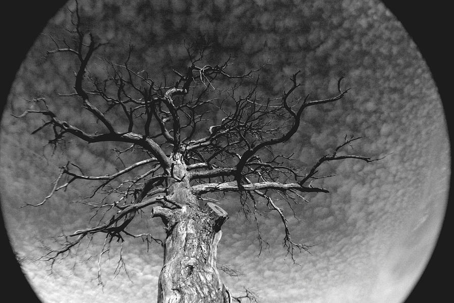 Moon Photograph - The Moon Tree by Artist Orange