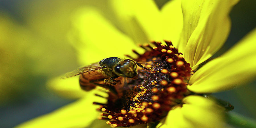 Bee Photograph - What Do You Want by Gilbert Artiaga