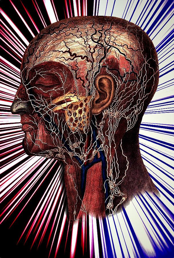 Medical Illustration Drawing - The Nerve by Nok