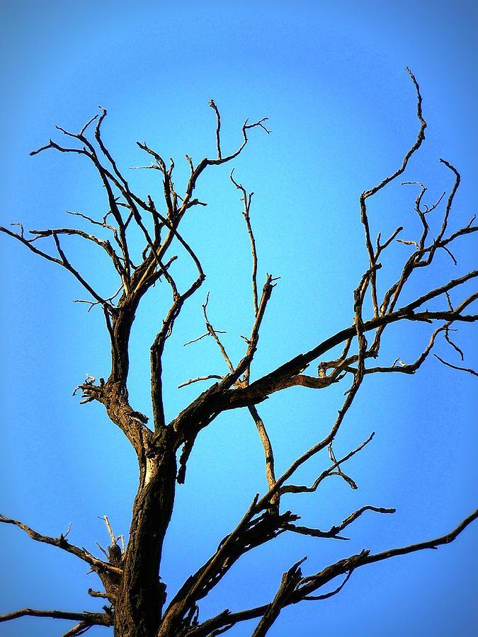 The Old Tree Pyrography by Mara Barova