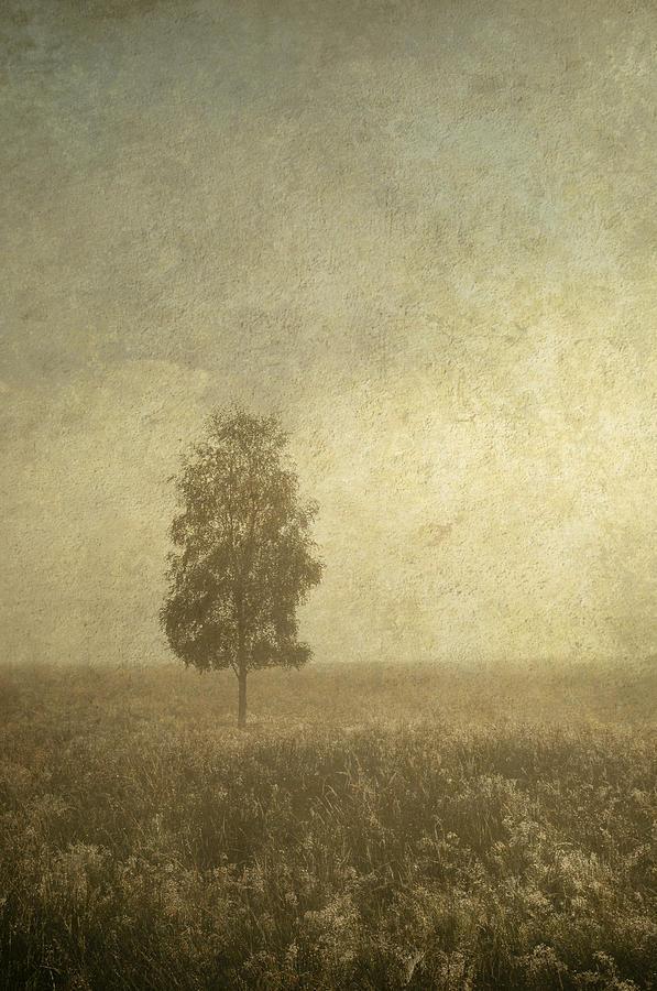Tree Photograph - The One by Jenny Rainbow