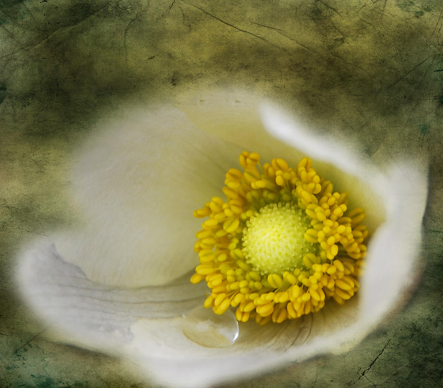 Flowers Photograph - The One Tear That Held  by Jerry Cordeiro