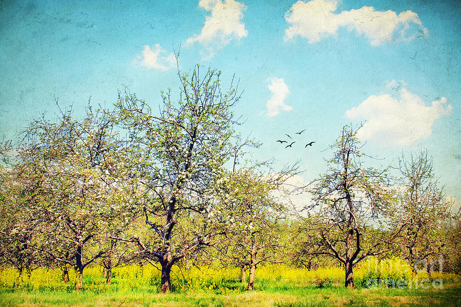 Apple Photograph - The Orchard by Darren Fisher