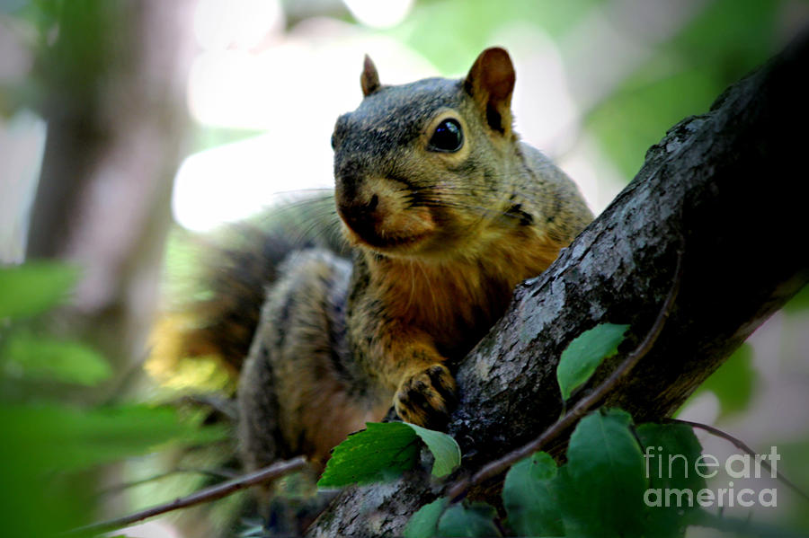 Squirrel Photograph - The Overseer by Cheryl Frischkorn