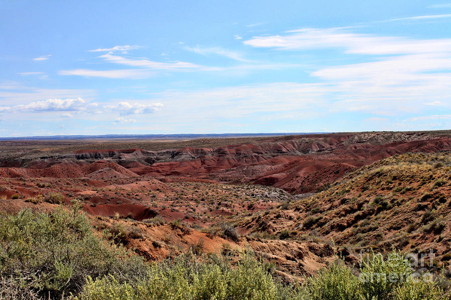 The Painted Desert Photograph - The Painted Desert by Tommy Anderson