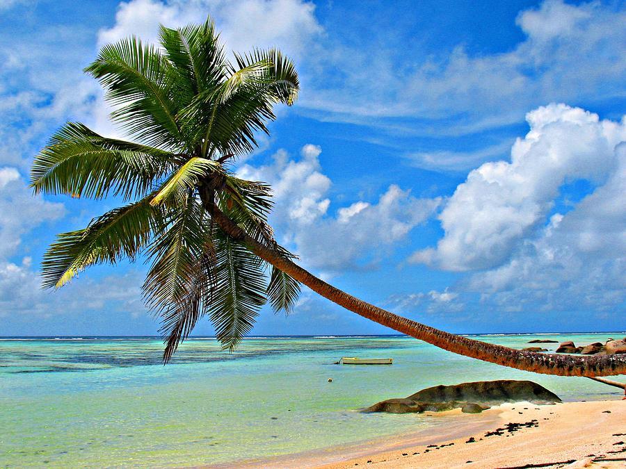 Palm Photograph - The Paradaise by Jenny Senra Pampin