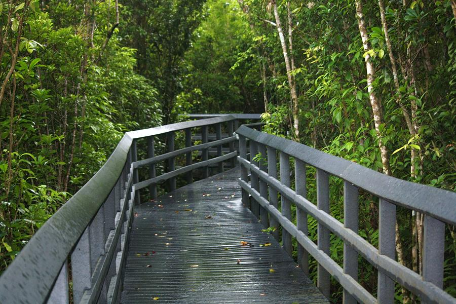 Florida State Parks Photograph - The Path by Andrea  OConnell