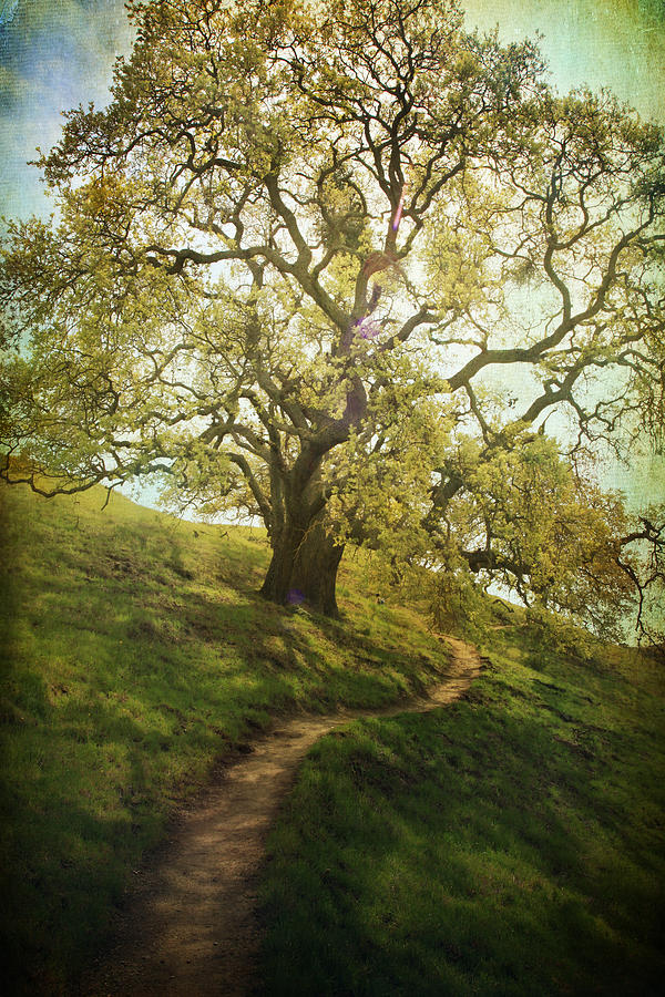 Trees Photograph - The Path To Brighter Days by Laurie Search