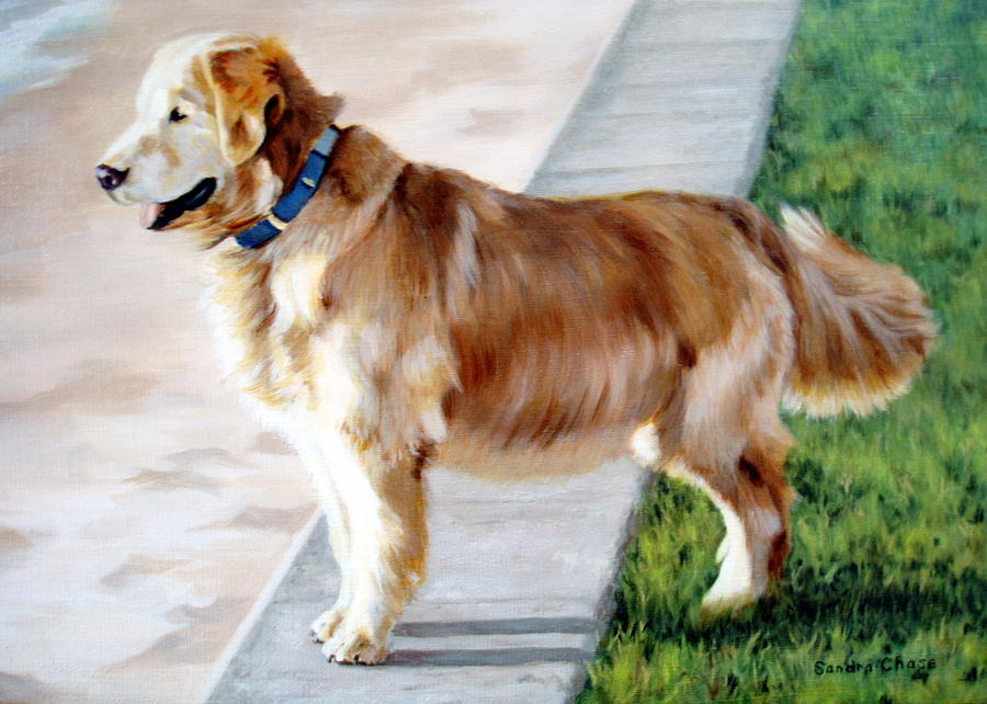 Dog Painting - The Patient Golden by Sandra Chase