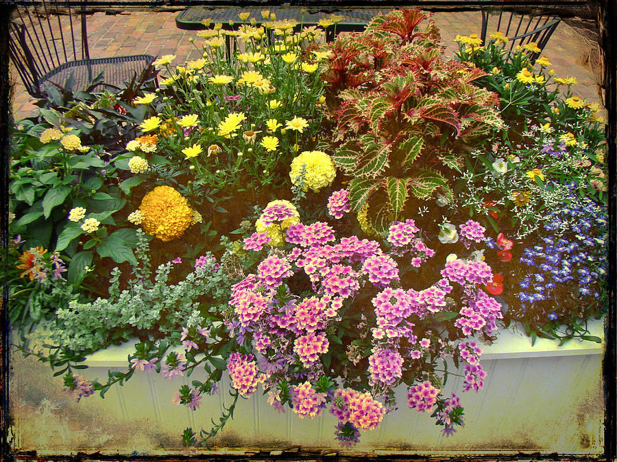 Floral Photograph - The Patio At Coffee O - Falmouth - Cape Cod - Massachusetts by Mother Nature