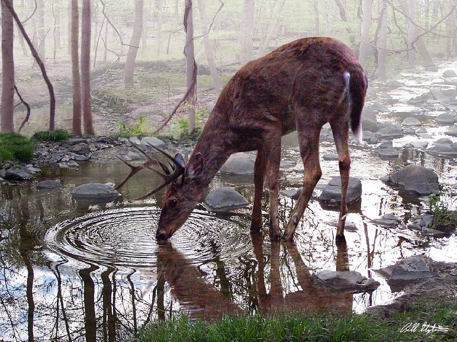 Deer Digital Art - The Pause by Bill Stephens