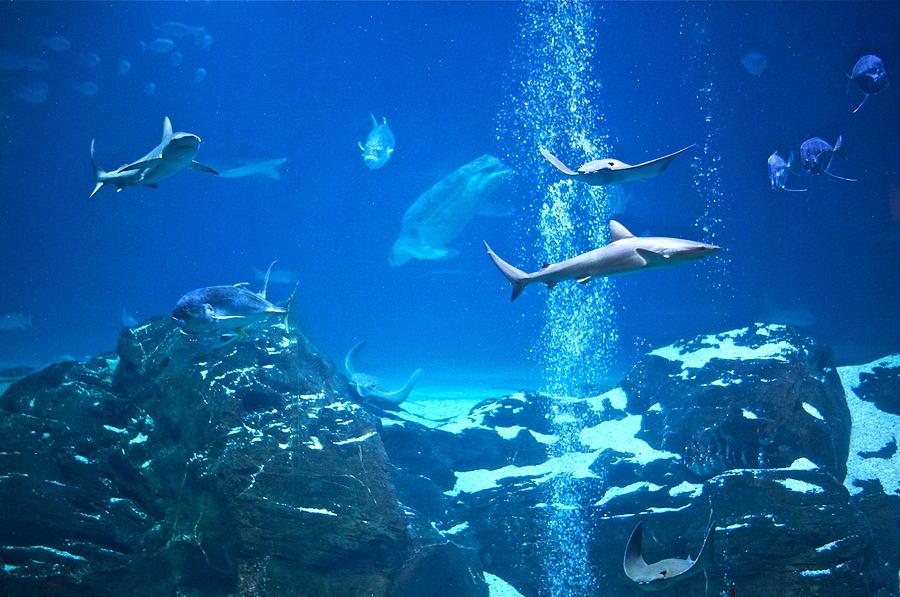Adventure Aquarium Photograph - The Peaceable Underwater Kingdom by Byron Varvarigos