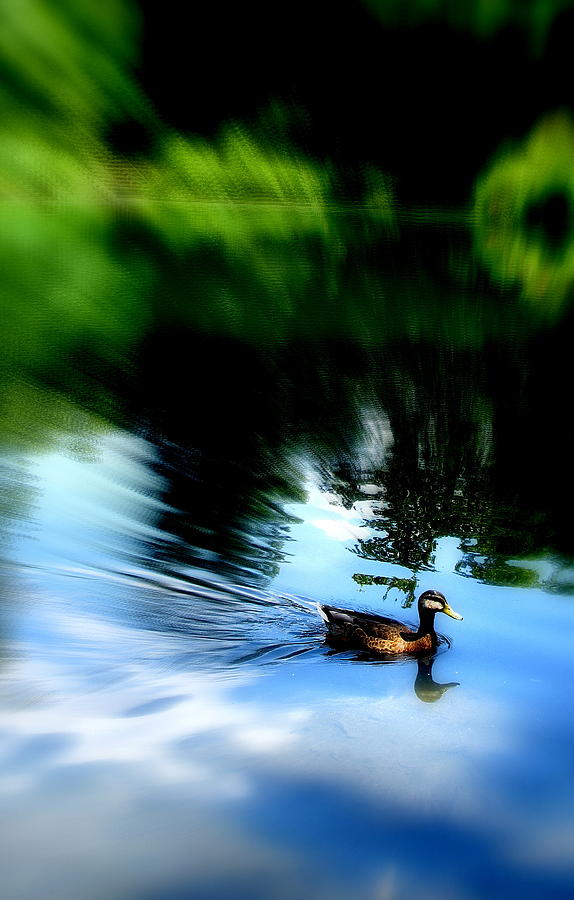 Duck Photograph - The Pond - Central Park Nyc by Maria Scarfone