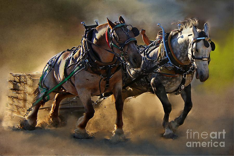 Horse Photograph - The Power of Two by Davandra Cribbie