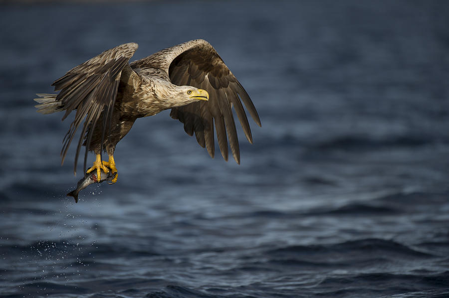 Flying Photograph - The Prize by Andy Astbury