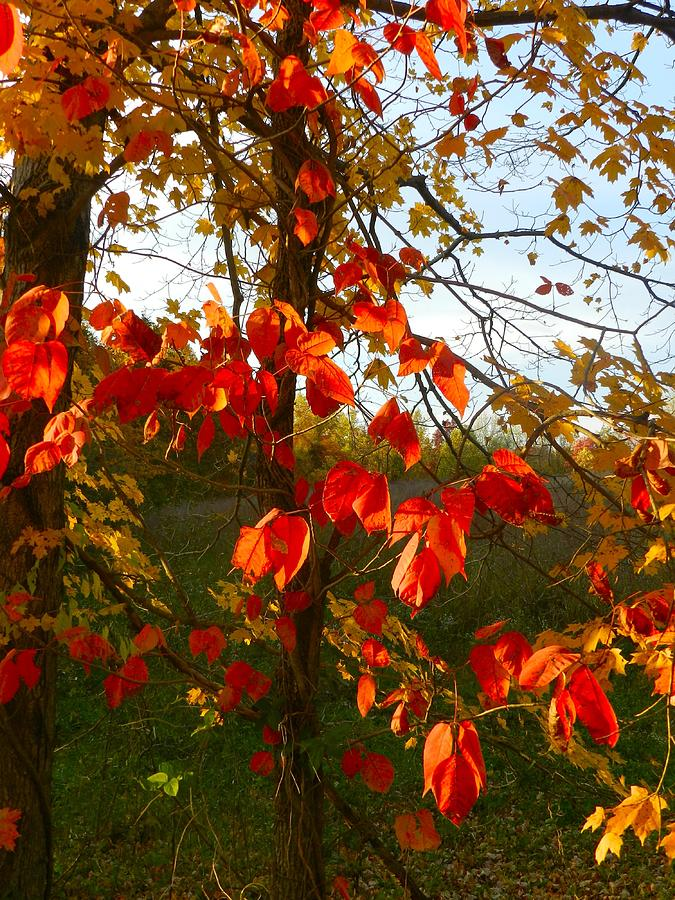 Autumn Photograph - The Reds Of Autumn by Julie Dant