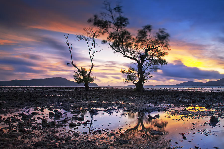 Reflex Photograph - The Reflex Of Tree In Sunset by Arthit Somsakul