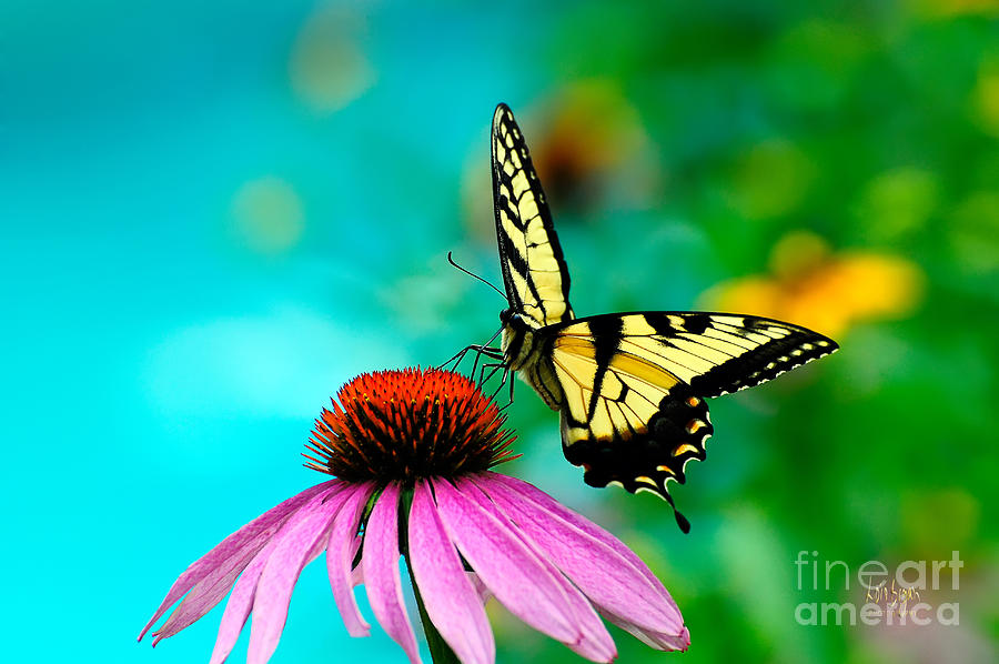 Butterfly Photograph - The Return by Lois Bryan