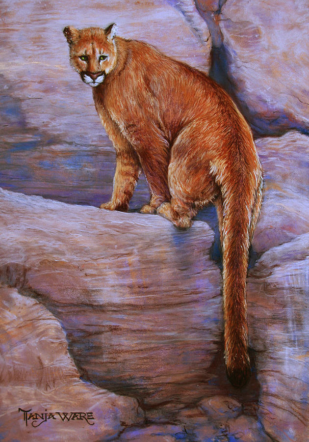 Cougar Painting - The Return by Tanja Ware