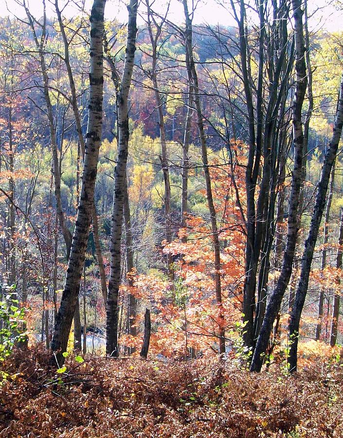 Fall Photograph - The Ridge by Diana Shively
