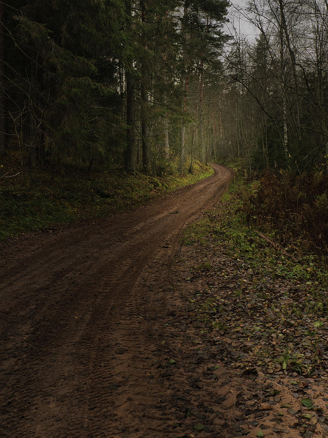Forest Photograph - The Road in the forest by Michael Goyberg